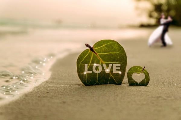 砂浜に立つハートの緑の葉