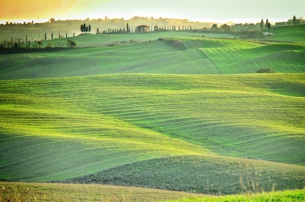 広がる緑の丘