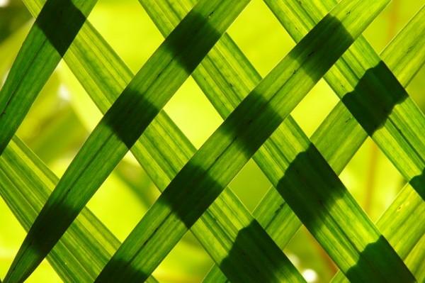 交差する緑の細い葉