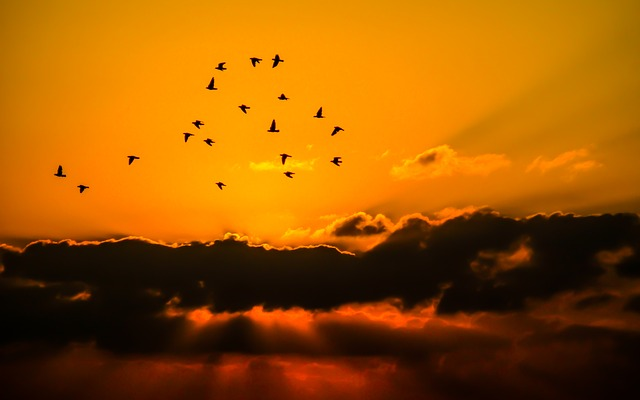 sky-orange