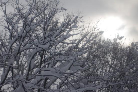 雪が積もった木