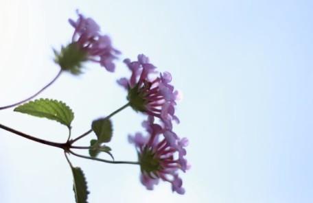 紫の小さい花