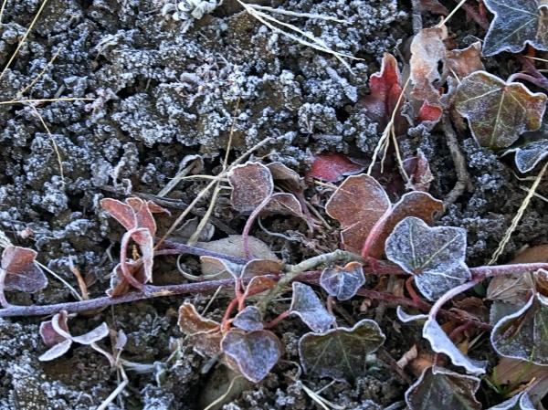 霜が降りる地面の葉