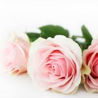 ピンクのローズ