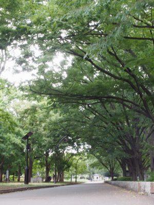 駒沢公園の緑