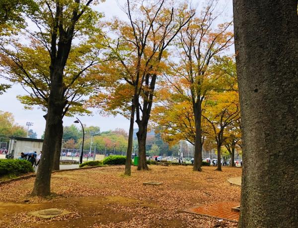 駒沢公園みんなの広場黄葉紅葉