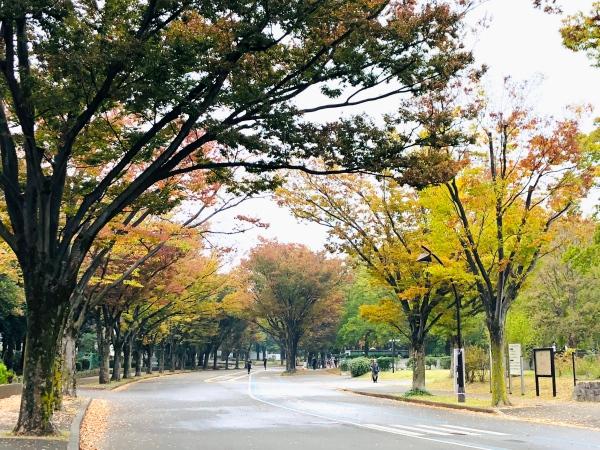駒沢公園周回コース